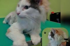 Úprava hodně zadredované kočky ...... Před i Po